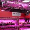 玉川大学/西松建設のLED植物工場「Sci Tech Farm」