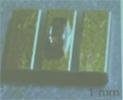 農工大/トクヤマ記者会見Vol.3 「AlN結晶成長の基礎技術と研究経緯」